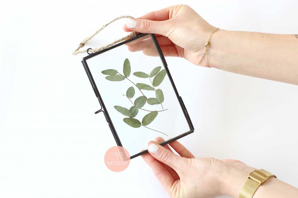 Cadre herbier, cadre végétal DIY, feuilles séchées